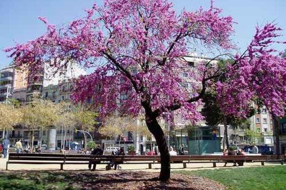 IN10172_20210201195550_galeriaProyecto2_Placa_Joanic_Barcelona.jpg